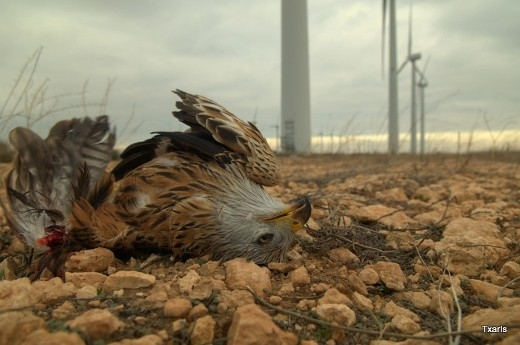 Turbine Bird kill